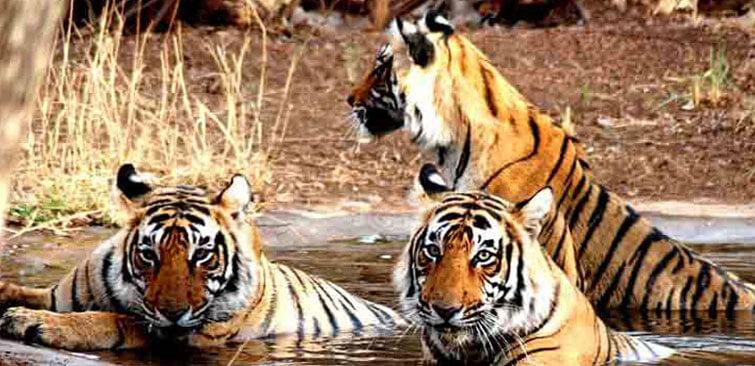 kanha National Park Madhya Pradesh