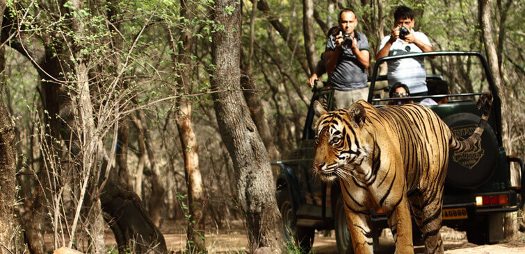 Kanha National Park Safari Timings