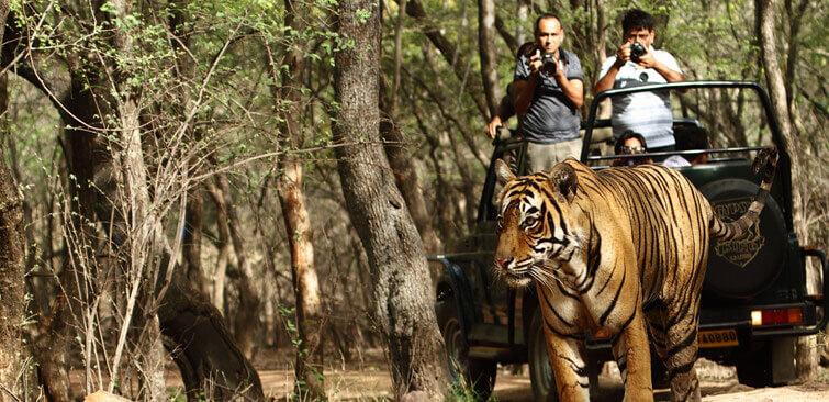 Kanha National Park Safari Timings