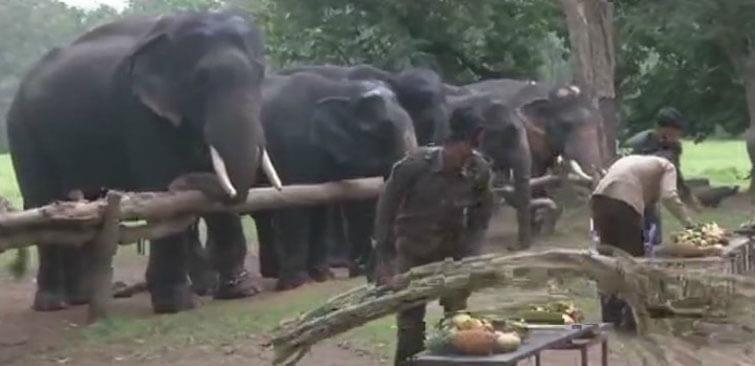 Elephants Picnic Kanha