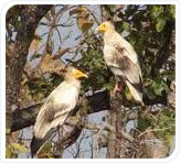 birds at pench national park