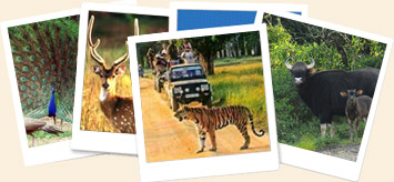 about kanha tiger reserve