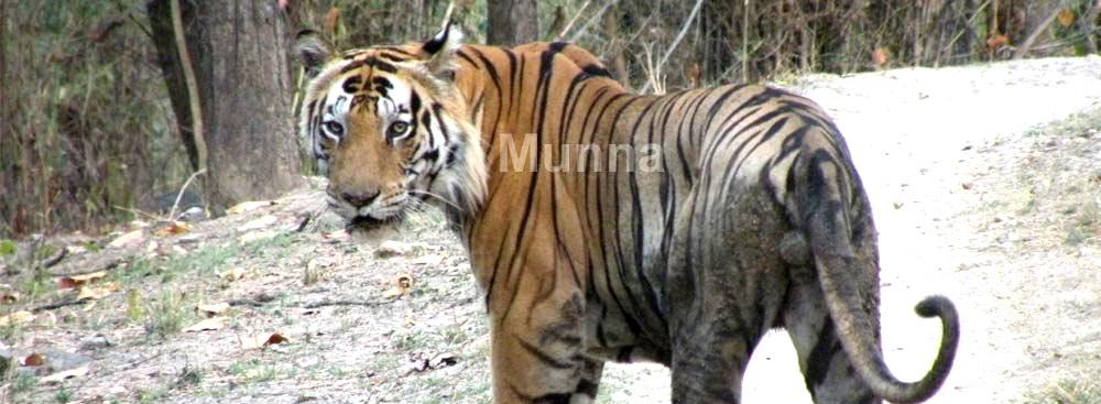 Kanha National Park Madhya Pradesh, India | Kanha Tiger Reserve