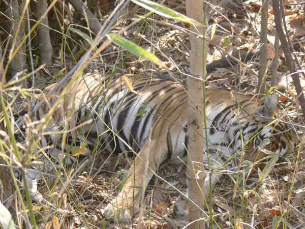 Kanha National Park Videos & Picture Gallery
